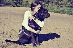 dog love chocolate labrador friends