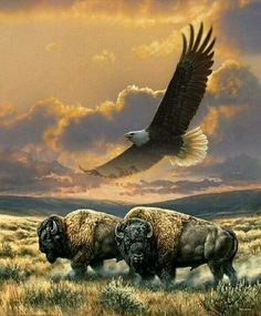 Two bison and an eagle Native American Pictures, Native American Artwork, Native American Indians, American Bison, American Animals, Beautiful Birds, Animals Beautiful, Buffalo Pictures, Buffalo Art