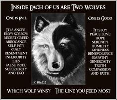 Two Wolves Quote Gallery inside each of us are two wolves wolf quotes two wolves Two Wolves Quote. Here is Two Wolves Quote Gallery for you. Two Wolves Quote tale of two wolves wolf quotes inspirational quotes quotes. Two Wolves Qu. The One You Feed, Native American Wisdom, Native American Wolf, Self Pity, Wolf Spirit, Spirit Animal, Humility, Peace And Love, Decir No