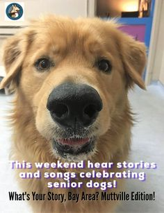 March 11-12 it's a Muttville SF Musical celebrating senior dogs & the people who love them!