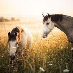 Horses grazing - beautiful pic. www.hillsidevets.co.uk