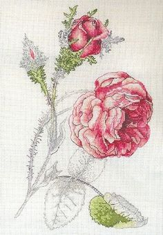 Coats Crafts Royal Horticultural Society Rose Muscosa Cross Stitch Kit x Cross Stitch Love, Cross Stitch Needles, Modern Cross Stitch, Cross Stitch Flowers, Cross Stitch Charts, Cross Stitch Designs, Cross Stitch Patterns, Embroidery Art, Cross Stitch Embroidery