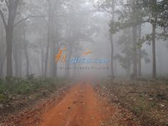 Mysore District Nagarhole National Park, Karnataka | The word Nagarhole is actually made up of two words namely Hole and Nagar which means streams and snake respectively.