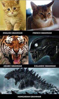 "I think Hungarian is the only European language that can challenge Finnish for the title of ""hardest language to learn"" Funny Cats, Funny Jokes, Hilarious, Cat Tiger, Nada Personal, German Grammar, French Grammar, Just For Fun, Cat Memes"
