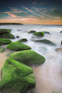 ✮ Green mossy rocks at Curl Curl Beach - Northern Beaches, Sydney NSW Australia
