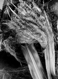 Palm leaves textures