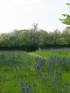 The planted meadow- Holt Organic Farm in Spring