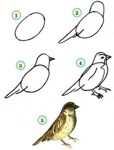 Birds are easy to draw - Instructions for - Tiere Malen Acryl Einfach - Art Bird Drawings, Animal Drawings, Easy Drawings, Drawing Sketches, Dragon Drawings, Sketching, Watercolor Bird, Drawing For Kids, Drawing Ideas