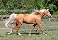 Palomino Tennessee Walker Horse 1 by venomxbaby.deviantart.com on @deviantART