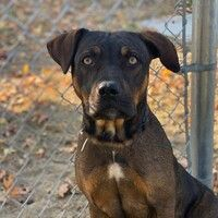 Downey California, American Pit, Animal Control, Large Animals, Pitbull Terrier, German Shepherd Dogs, Pit Bull, Pet Care, Pet Adoption