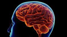 Ternyata, Otak Masih Bekerja Setelah Seseorang Meninggal