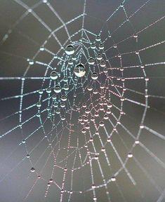 So Beautiful Natural Spider webs! https://www.facebook.com/AmazingFactsandNature1