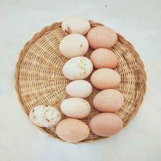 Ovos como eles são. // Eggs at natural.