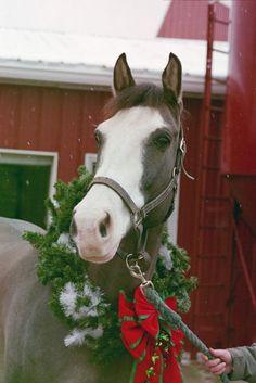 Burlap and Hay merry Merry Christmas! Christmas Horses, Merry Christmas, Cowboy Christmas, Christmas Scenes, Christmas Animals, Country Christmas, Christmas Time, Christmas Quotes, Cute Horses