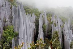Rock Pinnacles, Gunung Mulu National Park, Malaysia