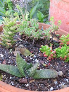 Cactus and suculents collection (cactaceae garden)