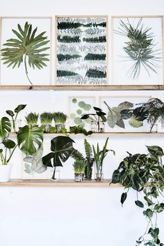 9 ways to display pressed leaves and flowers. Photography by Warren Heath. Styling by Sven Alberding. From the August 2017 issue of Inside Out Magazine. Available from newsagents, Zinio, https://au.zinio.com/magazine/Inside-Out-/pr-500646627/cat-cat1680012#/  and Nook.