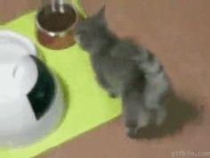 Some nice cat gifs. - Imgur
