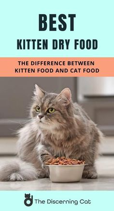 There are so many things to think about when taking care of a new kitten. They have to be kept busy, healthy, and of course, showered with love. But kittens also need to eat, and the abundance of food choices can make things seem complicated. This Kitten Dry Food guide will help you decipher the many different choices out there and point you in the right direction. #kittenfood #kittendryfood #kittencare #kittenfoodguide Healthy Cat Food, Best Cat Food, Dry Cat Food, Sick Kitten, Happy Kitten, Kitten Food, Kitten Care, Cat Cpr