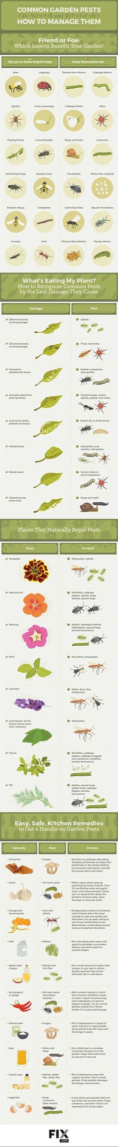 GARDEN CHEAT SHEETS | The Garden Glove - Gardening Living