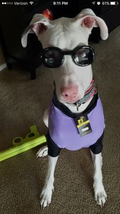 Minion Funny Dog Images, Funny Dogs, Dog Halloween Costumes, Dog Costumes, Rescue Dogs, Animal Rescue, Dog Photo Contest, Dog Years, Dog Photos