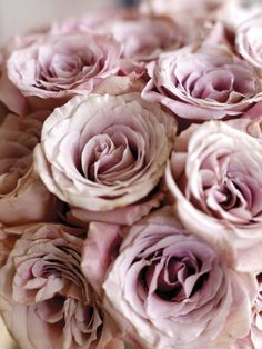 My Story... roses? Always!