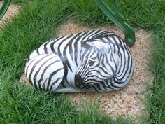 Rockpainting - Zebra 0001