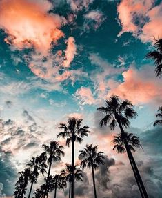 Regarder le ciel sous les palmiers
