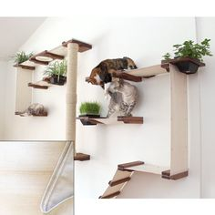 CatastrophiCreations Cat Mod Garden Complex Handcrafted Wall Mounted Cat Tree Shelves with Planter for Cat Grass, English Chestnut/Natural, One Size por Catastrophic Creations LLC Cool Cat Trees, Diy Cat Tree, Space Cat, Cat Wall Shelves, Shelves For Cats, Pipe Shelves, Cat Tree Plans, Cat Gym, Cat Jungle Gym