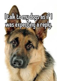 And sometimes I get one! #dogsfunnytext