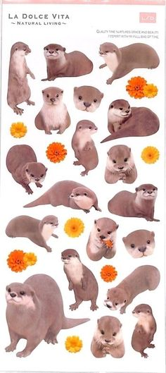 kawaii animal otter stickers by Mind Wave 1 Otters Cute, Baby Otters, Baby Sloth, Otter Tattoo, Baby Animals, Cute Animals, Kawaii, Animal Sketches, Watercolor Animals