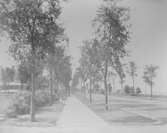 Looking north on Lake Shore Drive, c. 1885. During the late 19th century, Lake Shore Drive was a relatively quiet boulevard used for carriage rides along the lakefront. The date is probably the mid-1880s, shortly after construction of the home of Bertha and Potter Palmer (1882, at 1350 North Lakeshore Drive), visible on the left.
