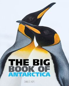 Buy Big Book of Antarctica by Wild Dog Books at Mighty Ape NZ. Antarctica is the driest, coldest and windiest continent on Earth. Even though it is a harsh and difficult place to live, Antarctica is home to more t. Gross Facts, Children's Book Week, The Future Of Us, Dog Books, Animal Species, Children's Picture Books, Wild Dogs, Extreme Weather, Antarctica