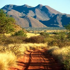 South African bush veld