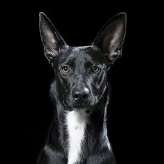 Man takes stunning personal portraits of 15 Dogs, Cat and Horses   13   - Three Million Dogs