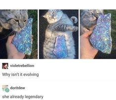 10 Tumblr Posts About Animals