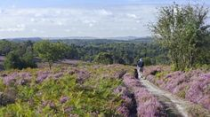 Visit the National Trust's Hindhead Commons and the Devil's Punch Bowl in Surrey, an Area of Outstanding Natural Beauty. Landscaping Images, British Countryside, Family Days Out, Day Hike, Grand Tour, British Isles, Surrey, Day Trips, Beautiful Landscapes
