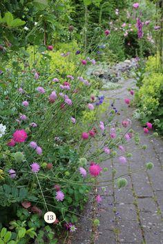 Knautia macedonica 'Melton Pastels' - All For Garden Garden Borders, Garden Paths, Love Flowers, Beautiful Flowers, Flower Garden Design, Garden Cottage, Plantation, Easy Garden, Dream Garden