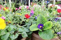Vibrant colour in every pot - our autumn planted containers. Wholesale Nursery, Autumn Garden, Container Plants, Garden Inspiration, Vibrant Colors, Colour, Color, Vivid Colors, Colors