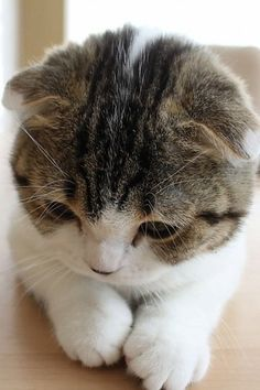 CuteCats... http://www.meowmoe.com/9152/. Awww!!!!!