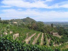 Asti countryside vineyards. Love Asti Spumanti. My uncle lives here. #venividi