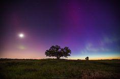 Tree of Aurora by Aaron J. Groen on 500px