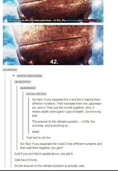 The answer to life is actually cats. (Keep in mind there is no truth to any of this, LOL) The Hitchhiker, Hitchhikers Guide, Tumblr Stuff, Funny Tumblr Posts, Funny Memes, Hilarious, Stupid Funny, Answer To Life, Best Of Tumblr