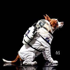 20 Pawsome Halloween Dog Costumes — My Pit Bull Friend Alien Dog Costume, Diy Dog Costumes, Animal Costumes, Dog Halloween Costumes, Creative Costumes, Costume Ideas, Aliens, Space Costumes, Dog Spaces