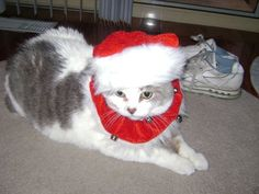 Casper the Christmas cat, she loved to dress up just to please people.