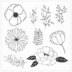 Flores desenhadas à mão e folhas