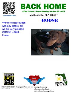 Helping Lost Pets   Dog - Dachshund - Back Home