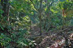 En la profundidad de la selva aparecen trazos de estos caminos