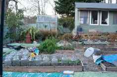 shedmans-garden