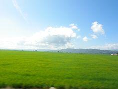 San Francisco de Marcoris / Bonao, Dominican Republic~  The rice fields along the road betweeen Bonao and San Francisco de Marcoris.